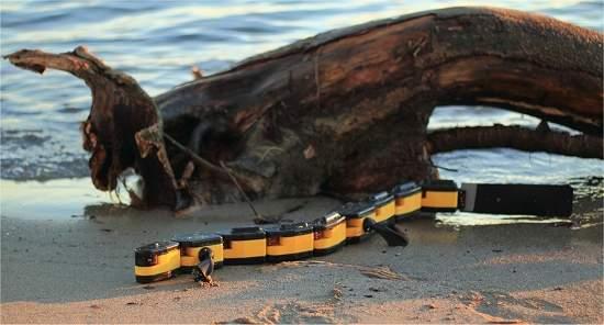 Notícias de Salamandra Robotica