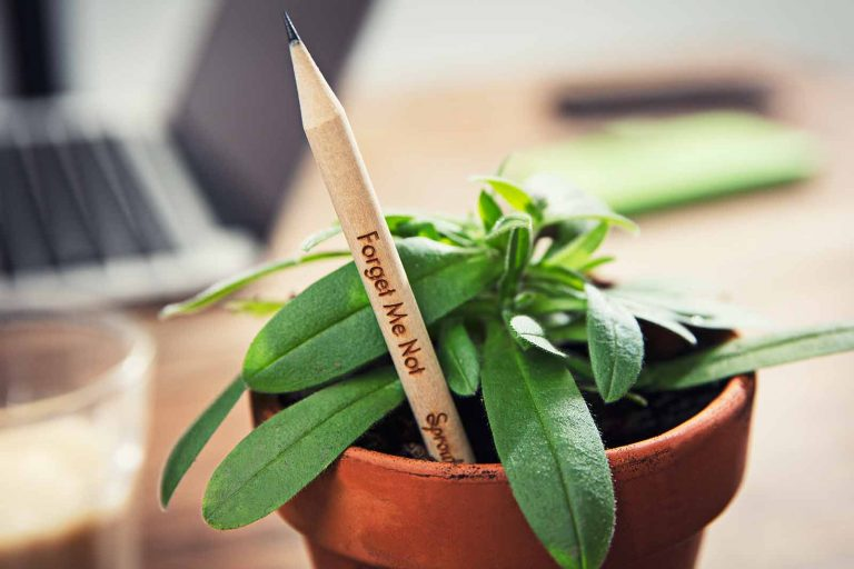 Empresa lança Lápis que vira planta depois de usado